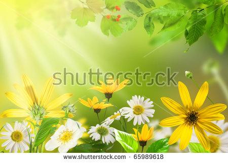 Green and yellow flower logos green and yellow flower background pixshark mightylinksfo